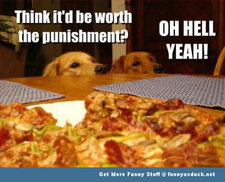 funny-dogs-pizza-pic