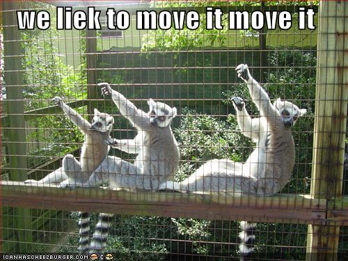 funny-pictures-dancing-lemurs