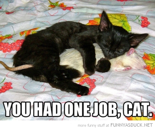 funny-pictures-had-one-job-cat-hugging-rat