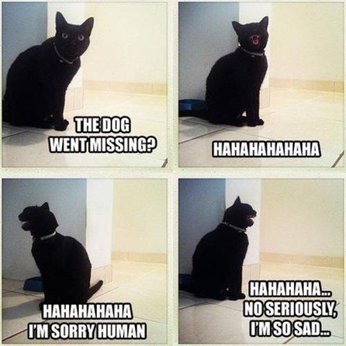 funny-animal-captions-003-002