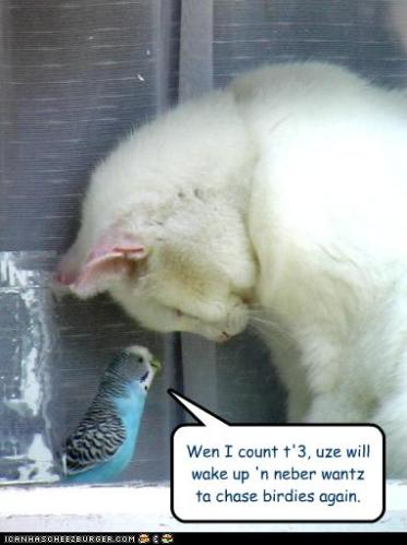 funny bird pictures with captions (15)