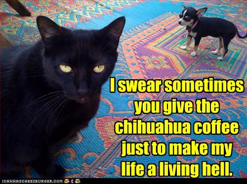 funnycatchihuahuacoffee